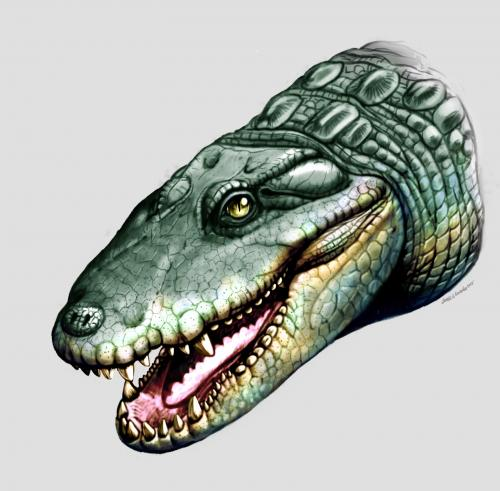 14 closely related crocodiles existed around 5 million years ago
