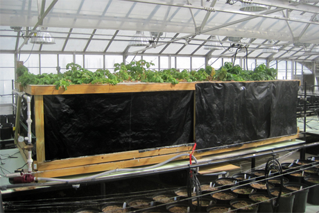 Aeroponics to boost NY potato production