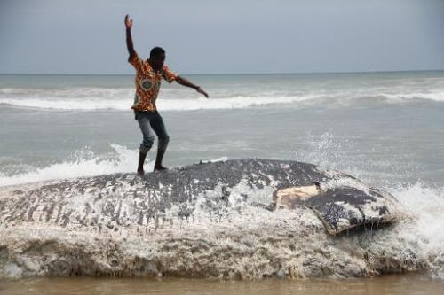A man stands on a dead whale on September 5, 2013 in Kokrobite, a coastal village just outside Accra