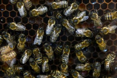 Bees have a much greater economic value than is widely known, according to a scientific probe into strawberry-growing published