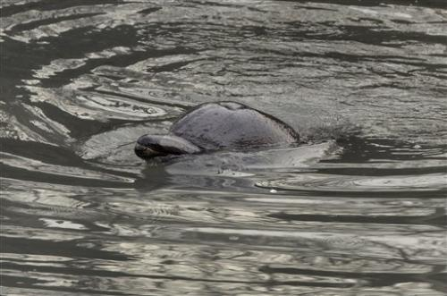 Biologist: Dolphin in NY canal was sickly and old