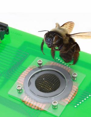 Bug's eye inspires hemispherical digital camera