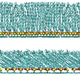 Computational study of human hair provides insights into structure of its poorly understood outer surface