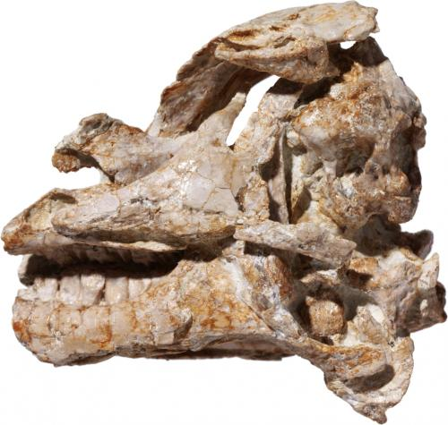 Fossil brain teaser