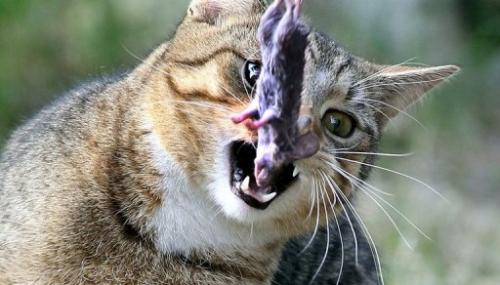 File picture. A campaign to eradicate New Zealand's cats to protect native wildlife has raised the hackles of pet lovers