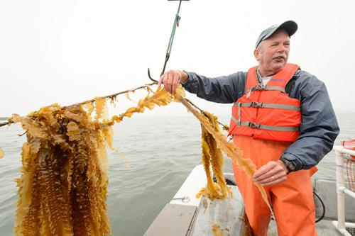 From the lab to the dinner table: Seaweed