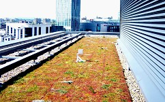 Green roofs may be a source of pollution