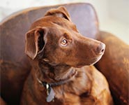 New insight into dogs' fear responses to noise