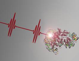 Laser pulses reveal DNA repair mechanisms