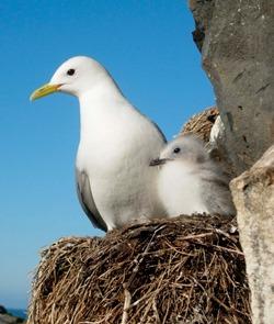 Influenza virus in wild birds in Norway