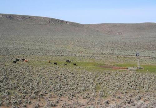 Land management options outlined to address cheatgrass invasion