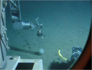 Mānoa: Submarine canyons a source of marine invertebrate diversity, abundance