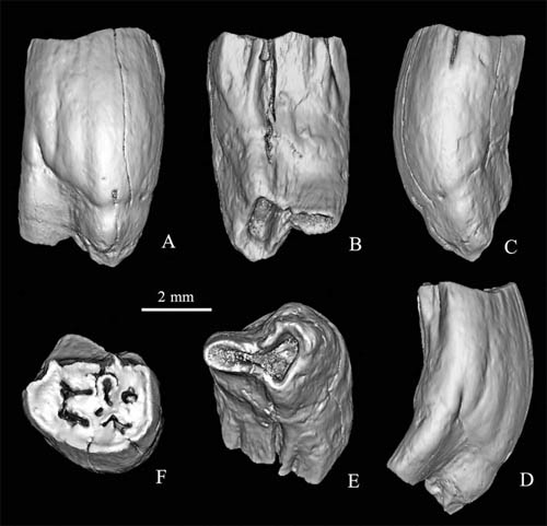 New species of mylagaulids (rodentia) found from the Miocene of northern Junggar Basin, China