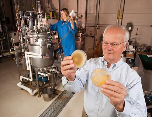 Бактерии против грибов: новые защитники пшеницы и ячменя