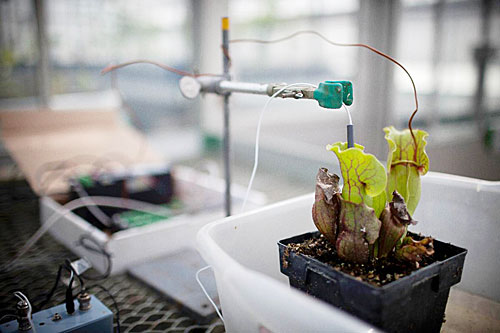 Pitcher plants provide tipping point: Researchers use them to identify signs of trouble in lakes