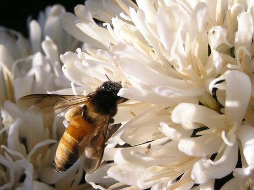 Pollination merely one production factor