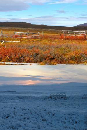 Research into carbon storage in Arctic tundra reveals unexpected insight into ecosystem resiliency