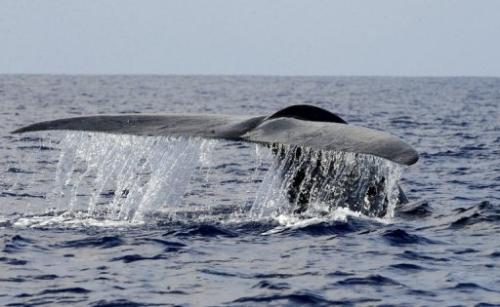 Scientists are delving deep into the travels of whales—thanks to high-tech tracking devices