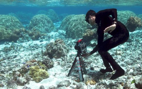 Stanford drones open way to new world of coral research