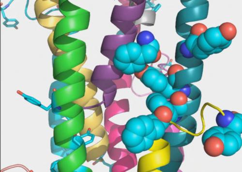 Structure of bacterial nanowire protein hints at secrets of conduction