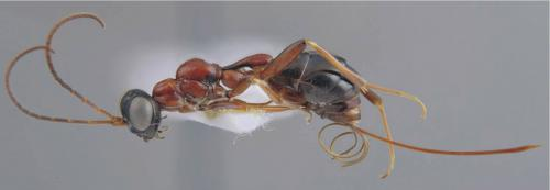 Survival of the fittest: Predator wasps breed at the expense of spider juveniles