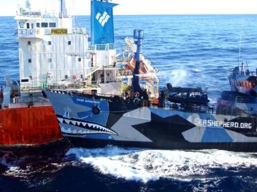 The Sea Shepherd ship Bob Barker (R) collides with the Japanese whaling fleet fuel tanker the San Laurel, on February 25, 2013