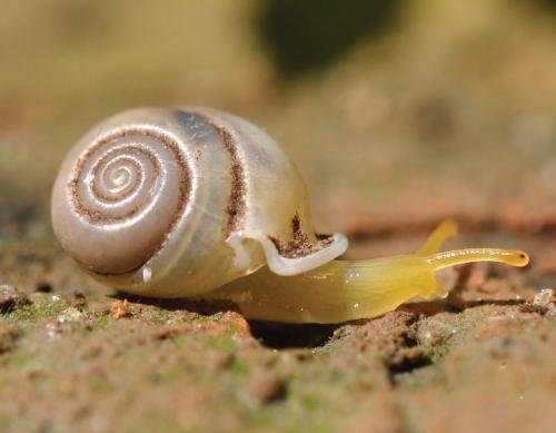Tiny colorful snails are in danger of extinction with vanishing limestone ecosystems