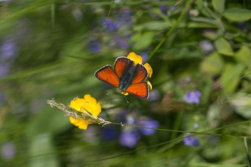 Turning problems into solutions: Land management as a key to countering butterfly declines