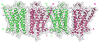 Researchers solve the 3-D crystal structure of one of the most important human proteins