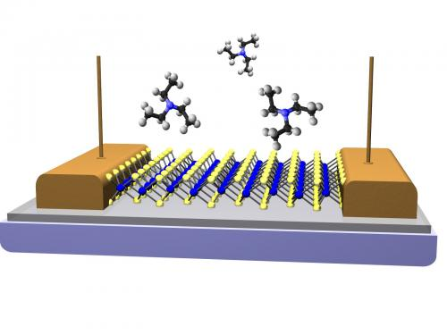 Researchers develop new monolayer materials for chemical vapor sensors