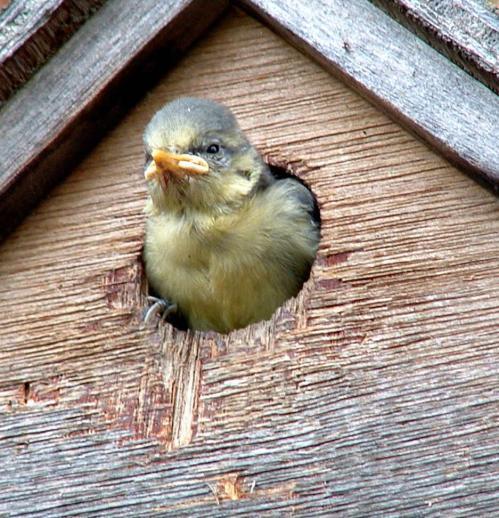 Study reveals uncertainty over the benefits of feeding birds in winter