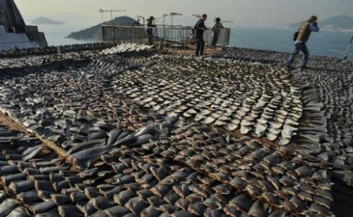 Image taken on January 2, 2013 shows shark fins drying in the sun on the roof of a factory building in Hong Kong