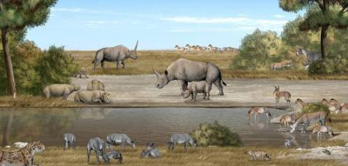 A tandem-horned rhino from the Late Miocene of China reveals origin of the unicorn elasmothere