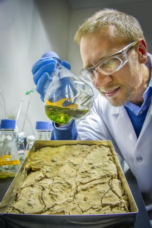 Berkeley Lab team uncovers secrets of biological soil crusts