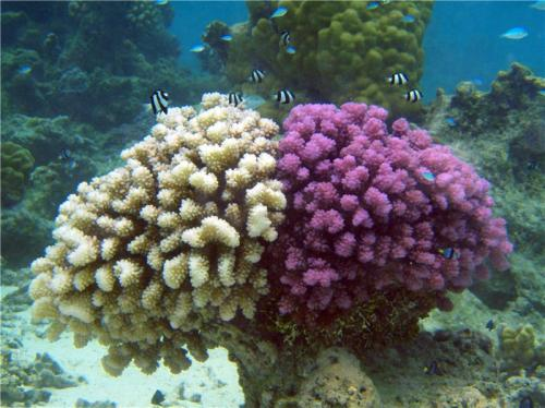 Corals surviving the ocean's pollution
