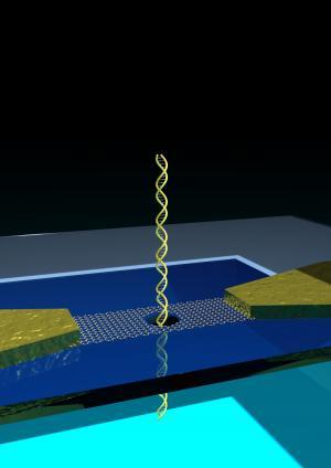 Graphene nanoribbons for 'reading' DNA
