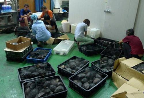 Image released on August 25, 2013 shows Forestry Bureau staff checking rare turtles in containers in Kaoshiung