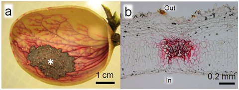 Insects' manipulation of plant phenotype that realized their ultimate