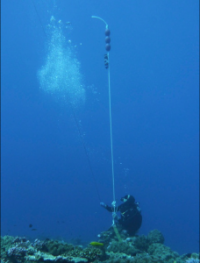 Mānoa: Scientists develop new method of estimating fish movements underwater
