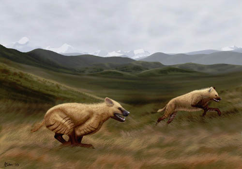 New cursorial hyena found from the late cenozoic Zanda Basin of Tibetan Plateau