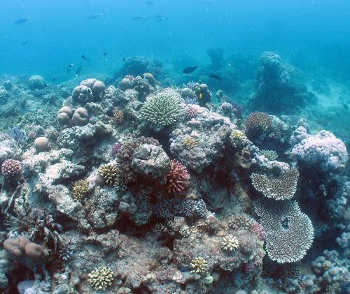 New study shows healthy Red Sea corals carry bacterial communities within