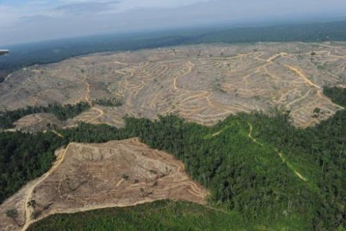 Picture taken on August 5, 2010 of a logged-over concession affiliated with Asia Pulp and Paper in Jambi, Indonesia
