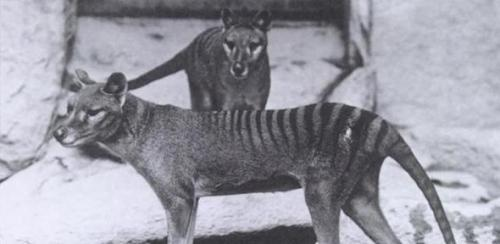 Scientists highlight the resurrection of extinct animals as both a strong possibility and a major potential conservation issue