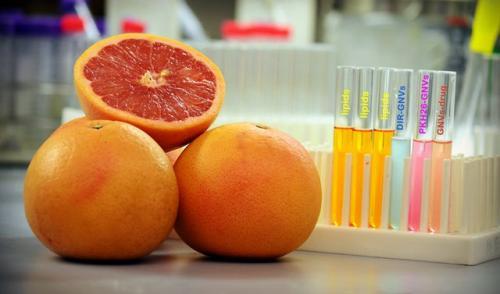 Липиды грейпфрута могут помочь в доставке лекарств