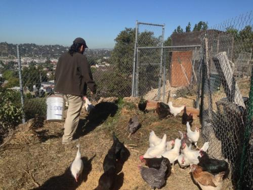Student researchers find urban agriculture thriving in Los Angeles County