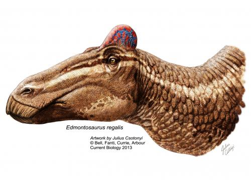 Surprise: Duck-billed dinosaurs had fleshy 'cocks comb'
