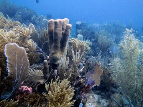 Why are some corals flourishing in a time of global warming?