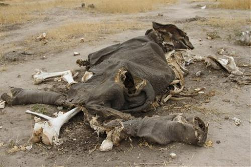 Zimbabwe: Poachers poison 91 elephants