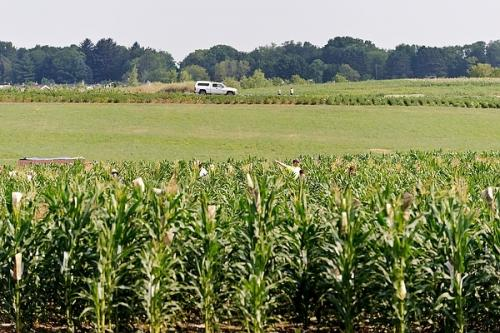 New technology could help food crops thrive in crowded fields
