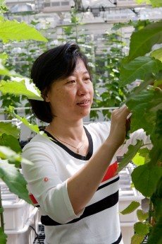 Researchers find way to improve plant defenses without negatively impacting growth